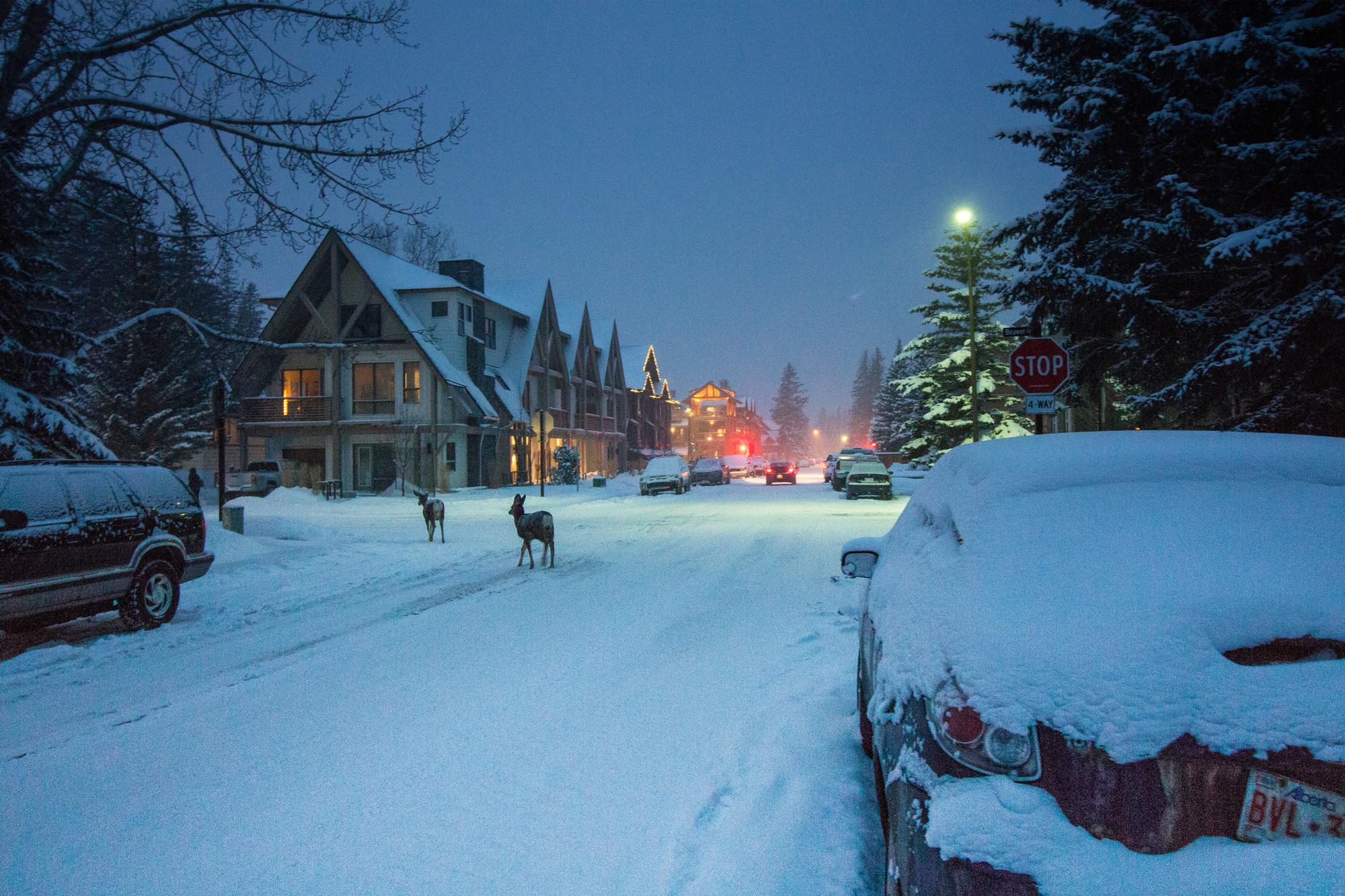 Deer Crossing, Banff