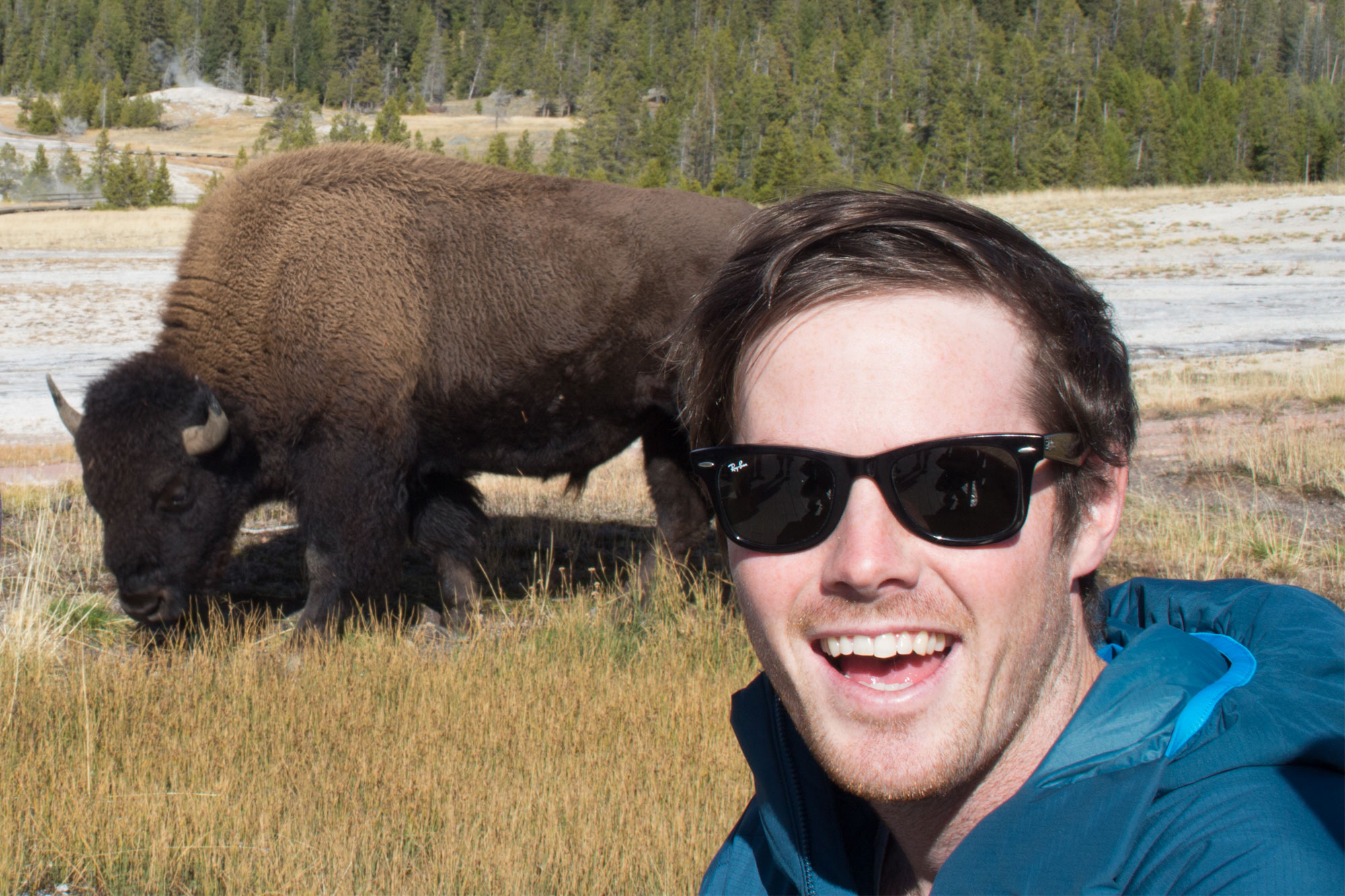 Cal up close to a Bison in Yellowstone National Park