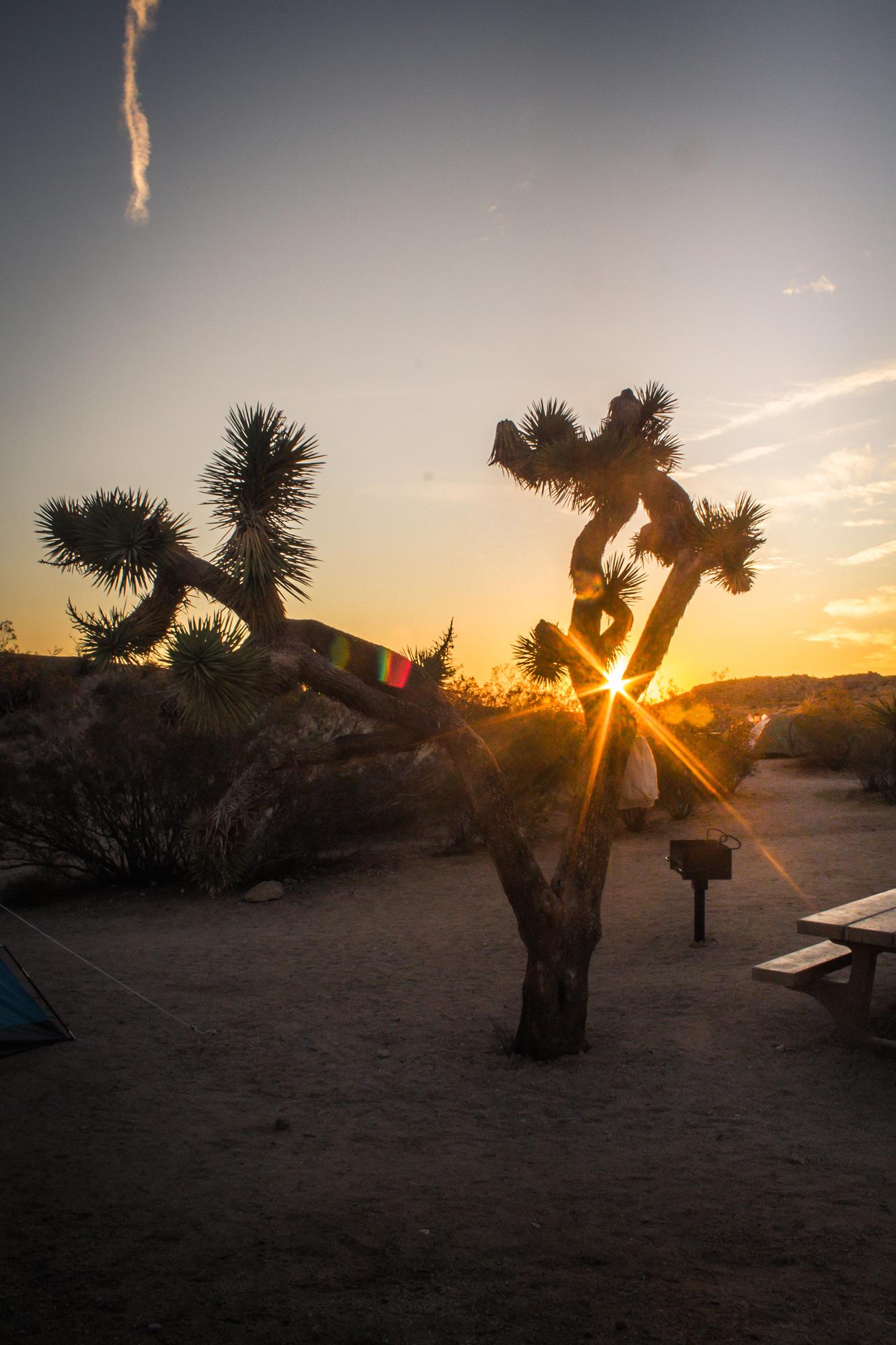 Sunrise in Joshua Tree National Park.jpg