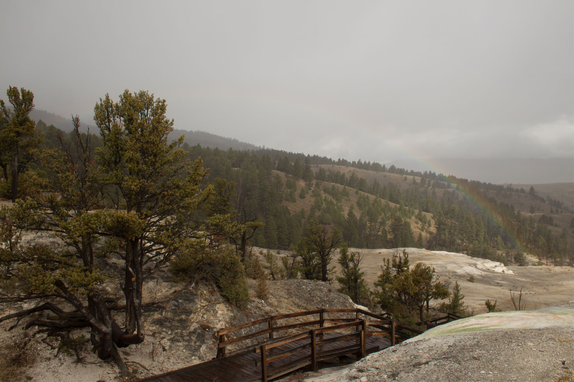 Top of Mammoth Hot Springs, Yellowstone National Park