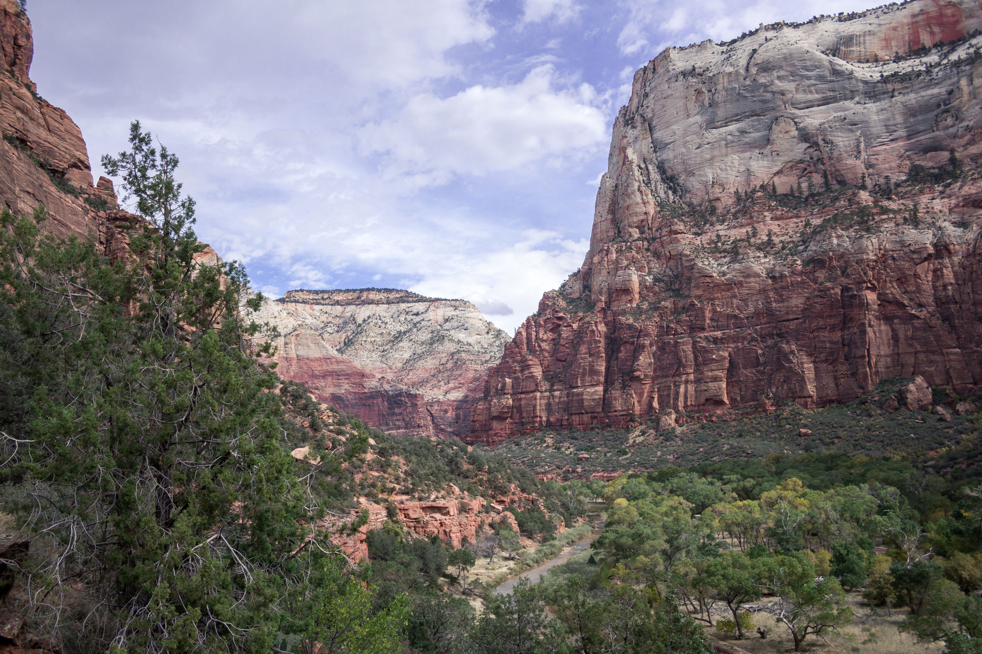 White and Red Cliffs of Zion National Park
